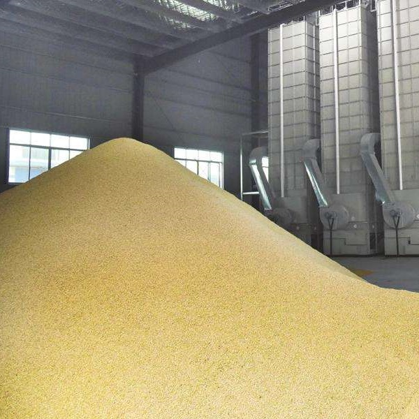 Grain drying is the key to opening up mechanized grain production (2)