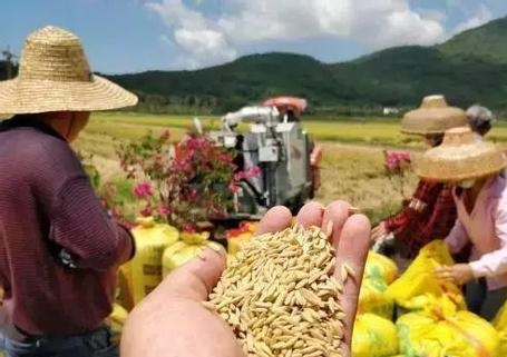Myanmar rice exports to increase grain machinery companies need to seize the opportunity